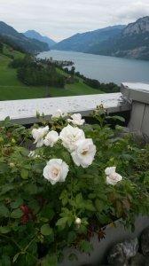 image 20 - Dachterrasse.JPG
